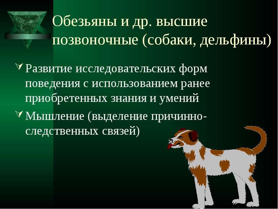 Обезьяны и др. высшие позвоночные (собаки, дельфины) Развитие исследовательск...