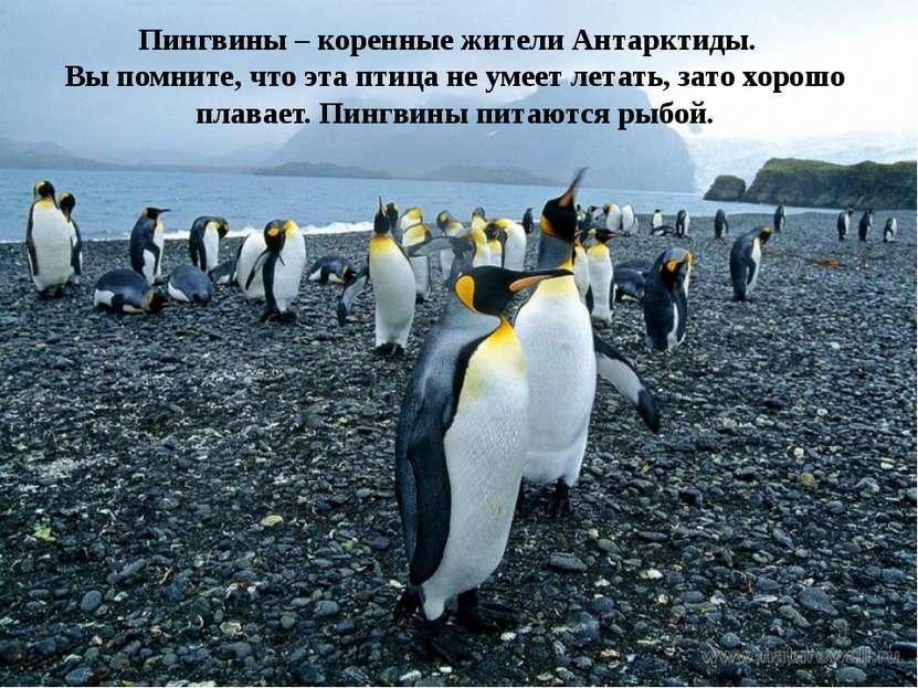Пингвины – коренные жители Антарктиды. Вы помните, что эта птица не умеет лет...