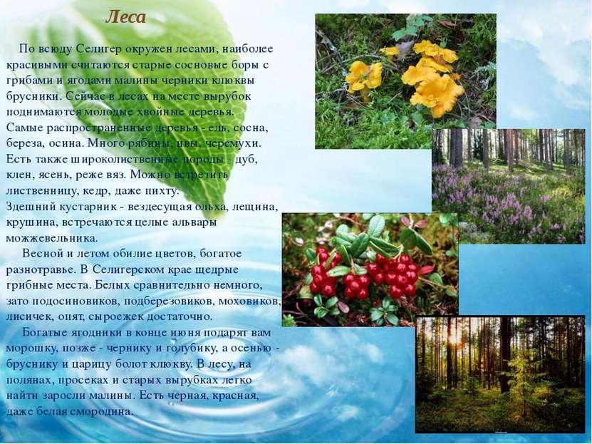 Леса По всюду Селигер окружен лесами, наиболее красивыми считаются старые сос...