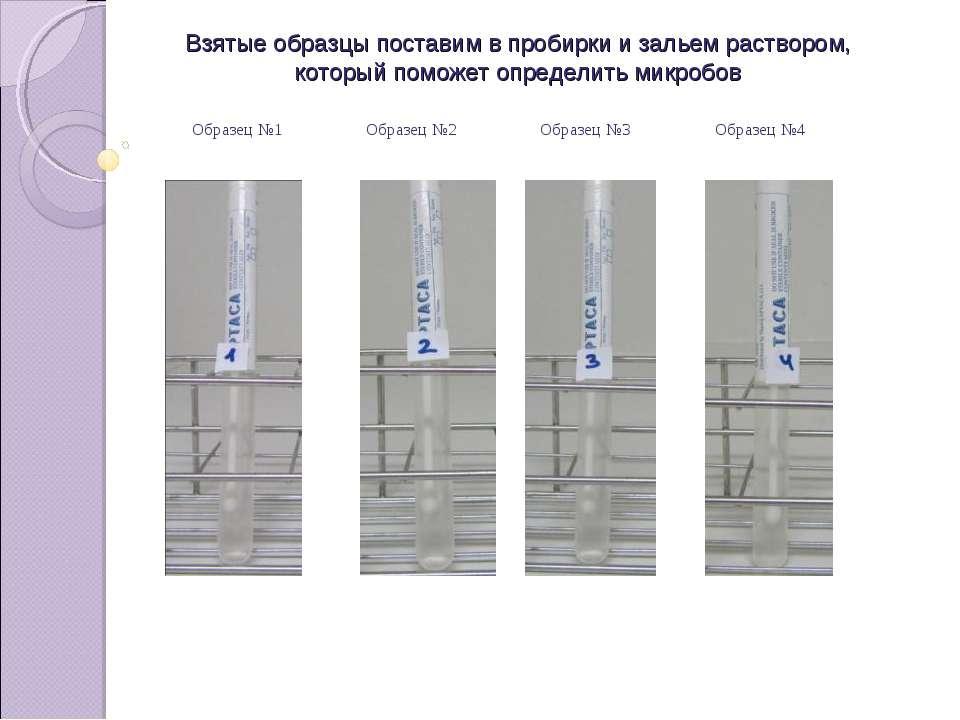 Взятые образцы поставим в пробирки и зальем раствором, который поможет опреде...