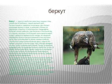 беркут Беркут — одна из наиболее известных хищных птиц семейства ястребиных,...