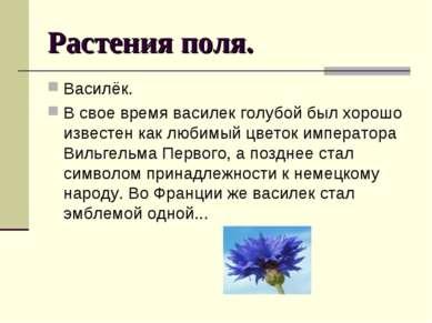 Растения поля. Василёк. В свое время василек голубой был хорошо известен как ...