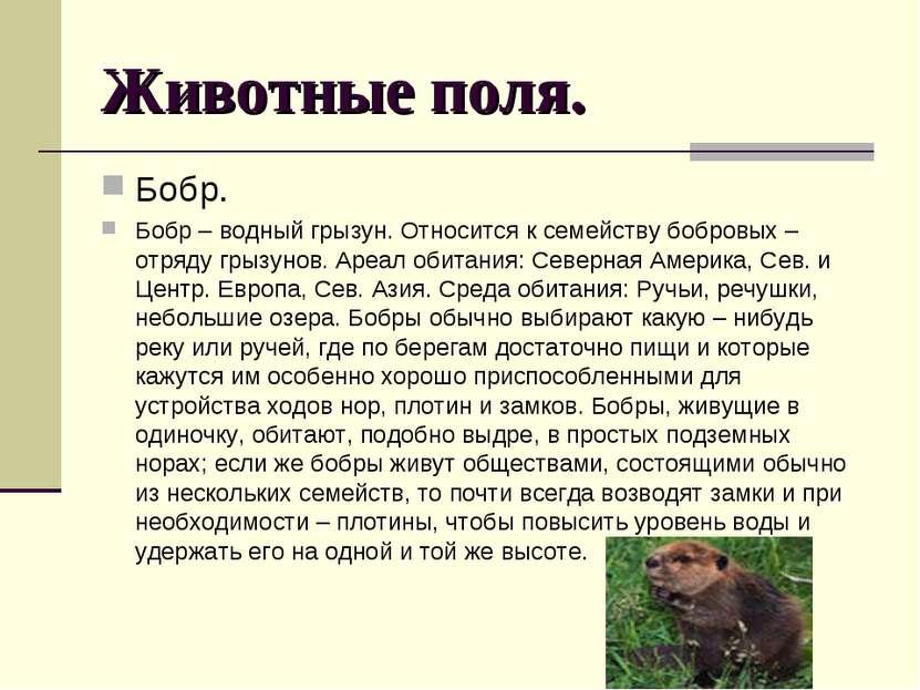 Животные поля. Бобр. Бобр – водный грызун. Относится к семейству бобровых –от...