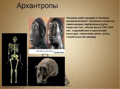 Архантропы Человек работающий и Человек выпрямленный: огромные челюсти, навис...