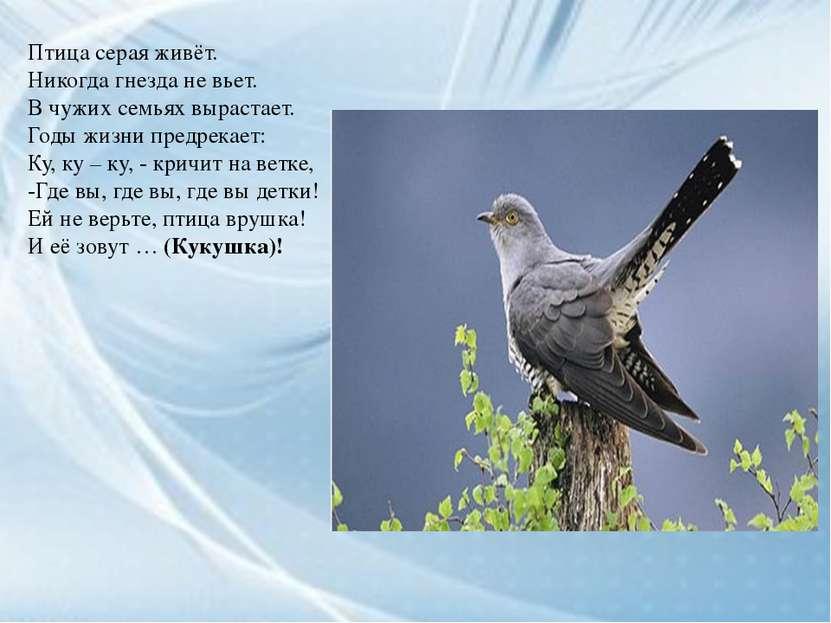Птица серая живёт. Никогда гнезда не вьет. В чужих семьях вырастает. Годы жиз...