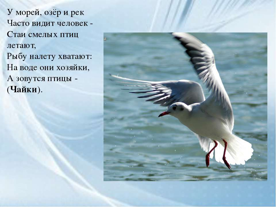 У морей, озёр и рек Часто видит человек - Стаи смелых птиц летают, Рыбу налет...