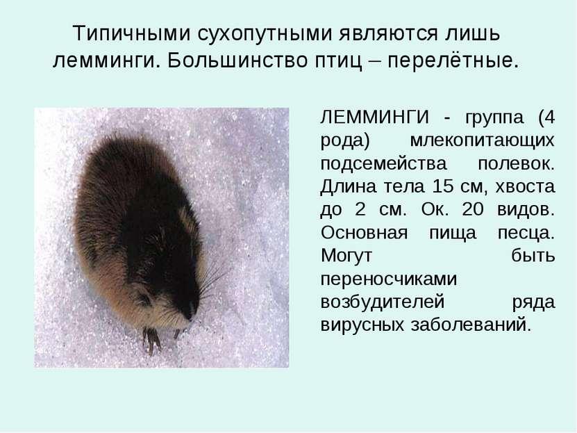 Типичными сухопутными являются лишь лемминги. Большинство птиц – перелётные. ...