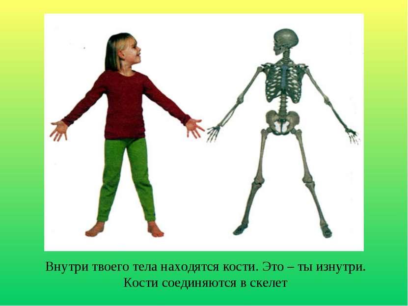 Внутри твоего тела находятся кости. Это – ты изнутри. Кости соединяются в скелет