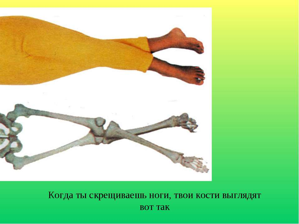 Когда ты скрещиваешь ноги, твои кости выглядят вот так