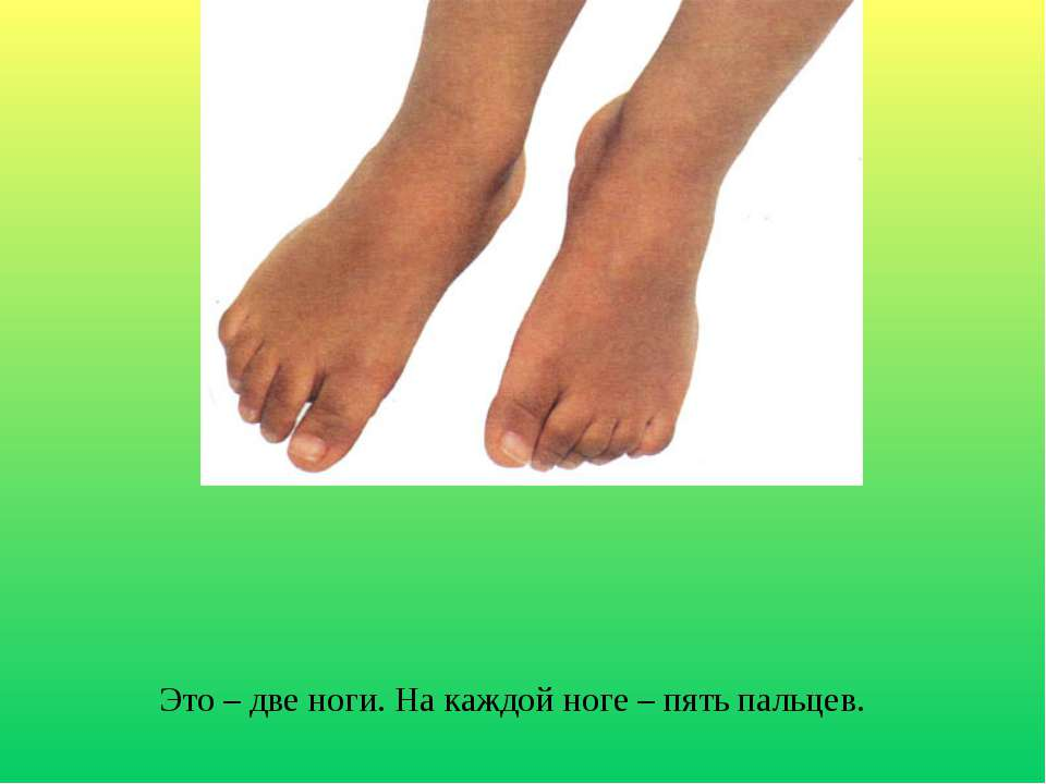 Это – две ноги. На каждой ноге – пять пальцев.