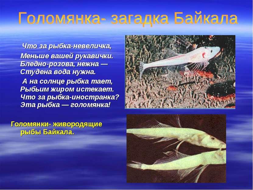 Что за рыбка-невеличка, Меньше вашей рукавички. Бледно-розова, нежна — Студен...