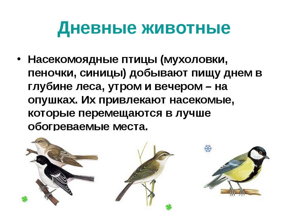 Дневные животные Насекомоядные птицы (мухоловки, пеночки, синицы) добывают пи...