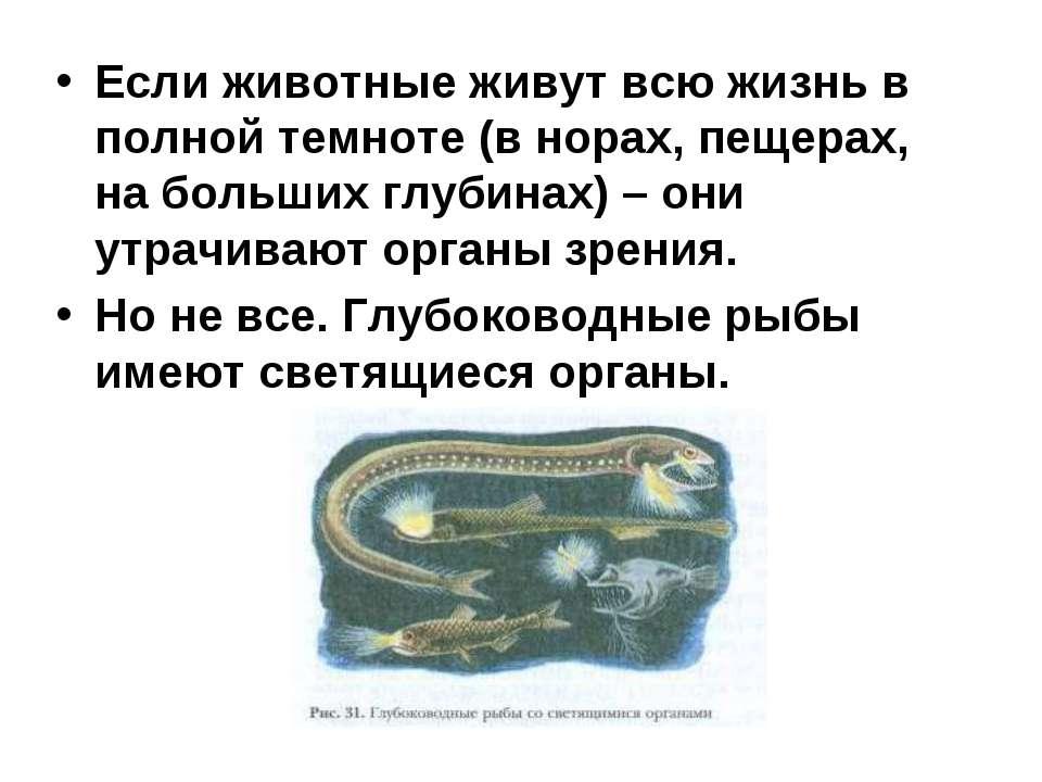 Если животные живут всю жизнь в полной темноте (в норах, пещерах, на больших ...