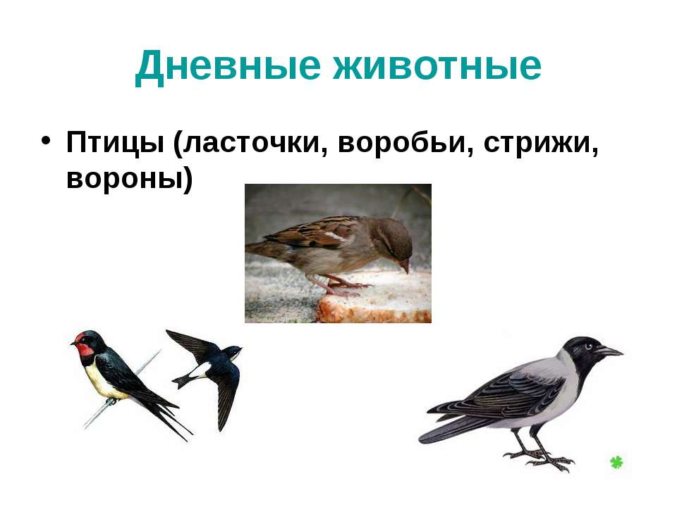 Дневные животные Птицы (ласточки, воробьи, стрижи, вороны)