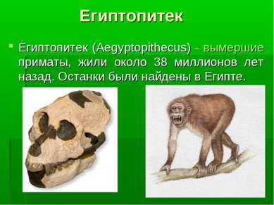 Египтопитек Египтопитек (Aegyptopithecus) - вымершие приматы, жили около 38 м...