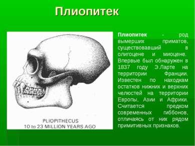 Плиопитек Плиопитек - род вымерших приматов, существовавший в олигоцене и мио...