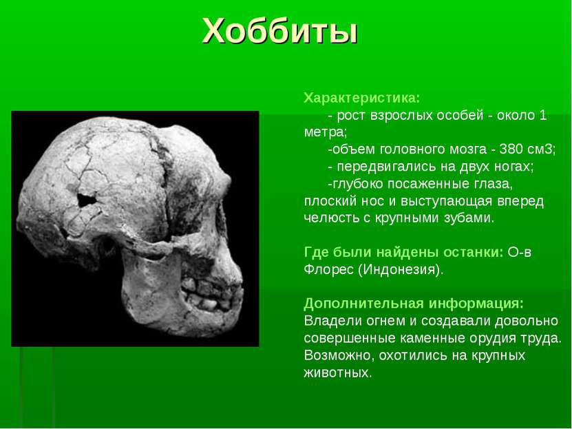 Хоббиты Характеристика: - рост взрослых особей - около 1 метра; -объем головн...