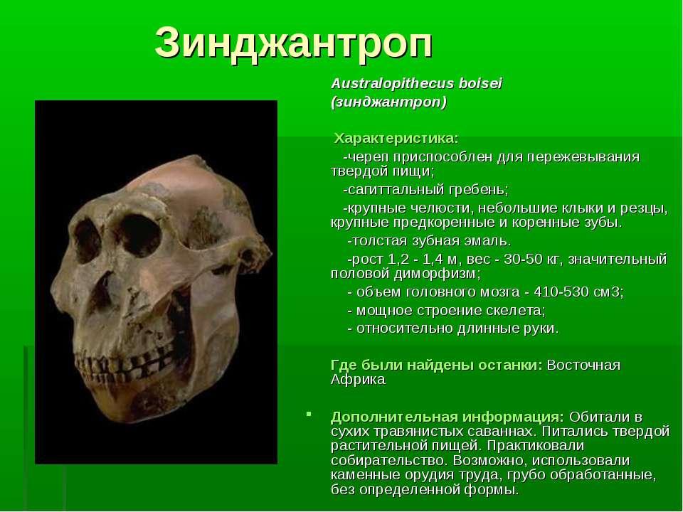 Зинджантроп Australopithecus boisei (зинджантроп) Характеристика: -череп прис...