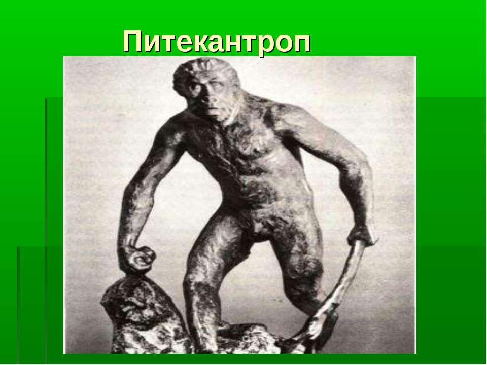 Питекантроп