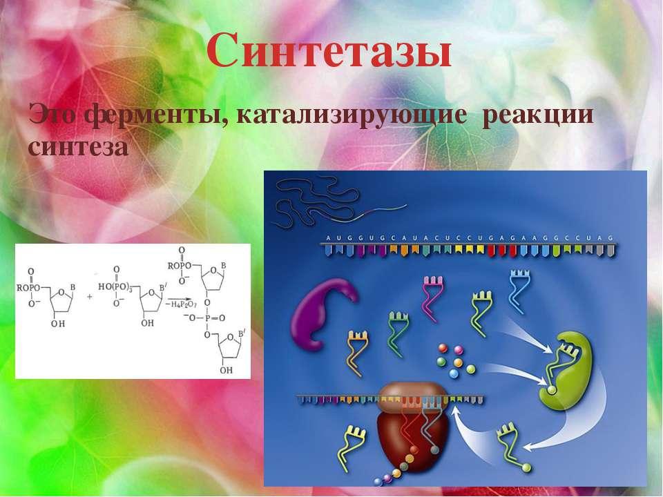 Синтетазы Это ферменты, катализирующие реакции синтеза