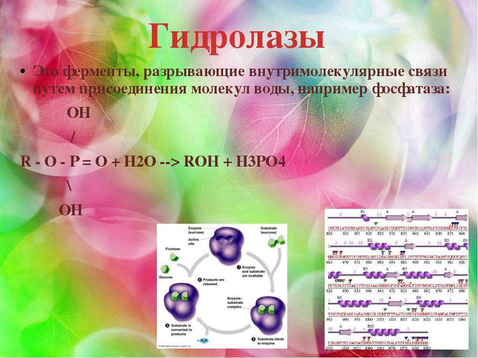 Гидролазы Это ферменты, разрывающие внутримолекулярные связи путем присоедине...
