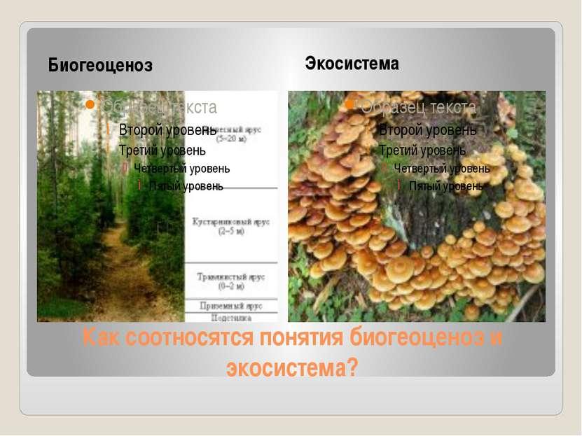 Как соотносятся понятия биогеоценоз и экосистема? Биогеоценоз Экосистема