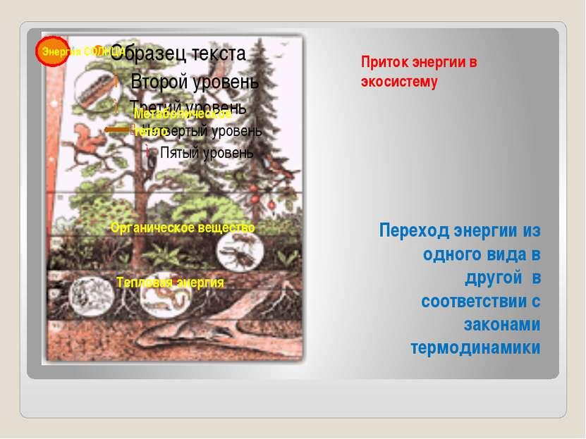 Приток энергии в экосистему Переход энергии из одного вида в другой в соответ...