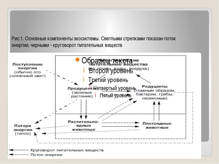 Рис.1. Основные компоненты экосистемы. Светлыми стрелками показан поток энерг...