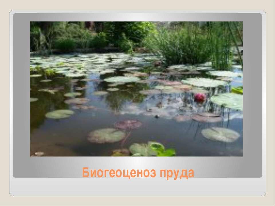Биогеоценоз пруда