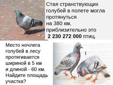 Место ночлега голубей в лесу протягивается шириной в 5 км и длиной - 60 км. Н...