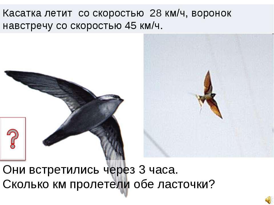 Касатка летит со скоростью 28 км/ч, воронок навстречу со скоростью 45 км/ч. О...