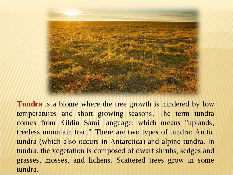 Tundra is a biome where the tree growth is hindered by low temperatures and...