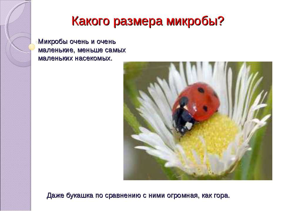Микробы очень и очень маленькие, меньше самых маленьких насекомых. Какого раз...