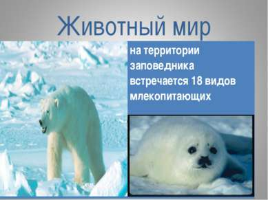 Животный мир на территории заповедника встречается 18 видов млекопитающих