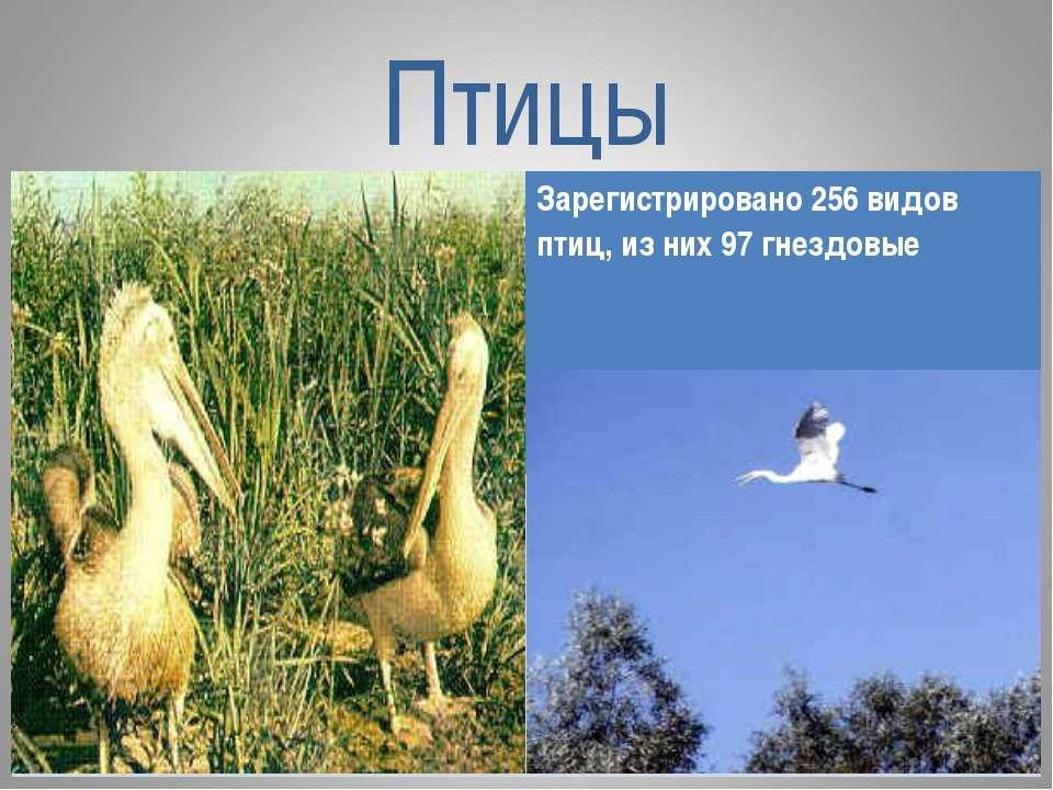 Птицы Зарегистрировано 256 видов птиц, из них 97 гнездовые