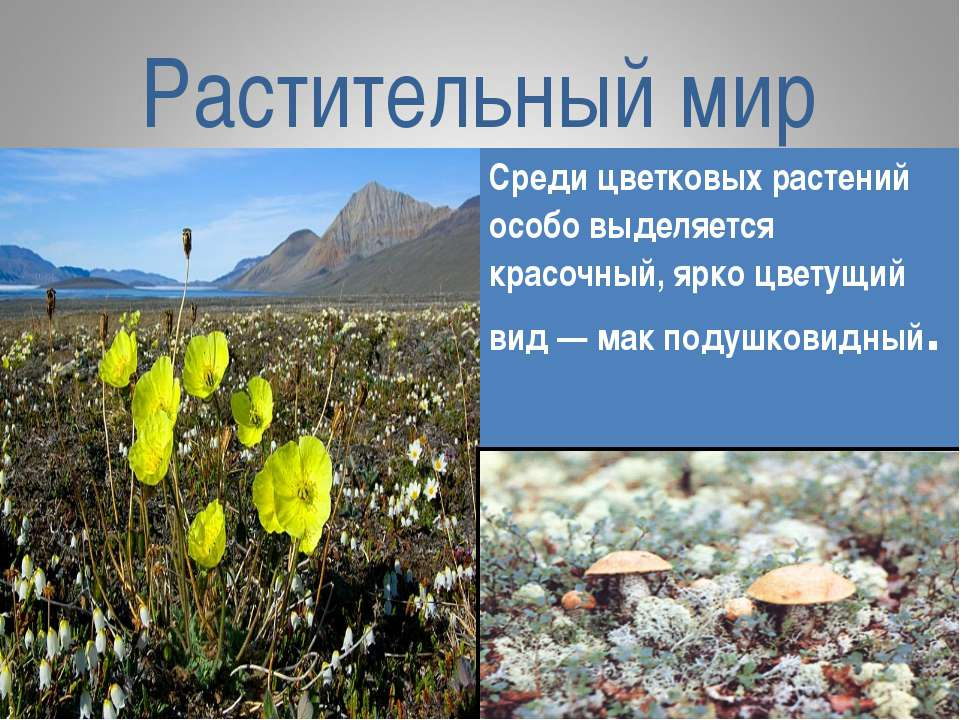 Растительный мир Среди цветковых растений особо выделяется красочный, ярко цв...