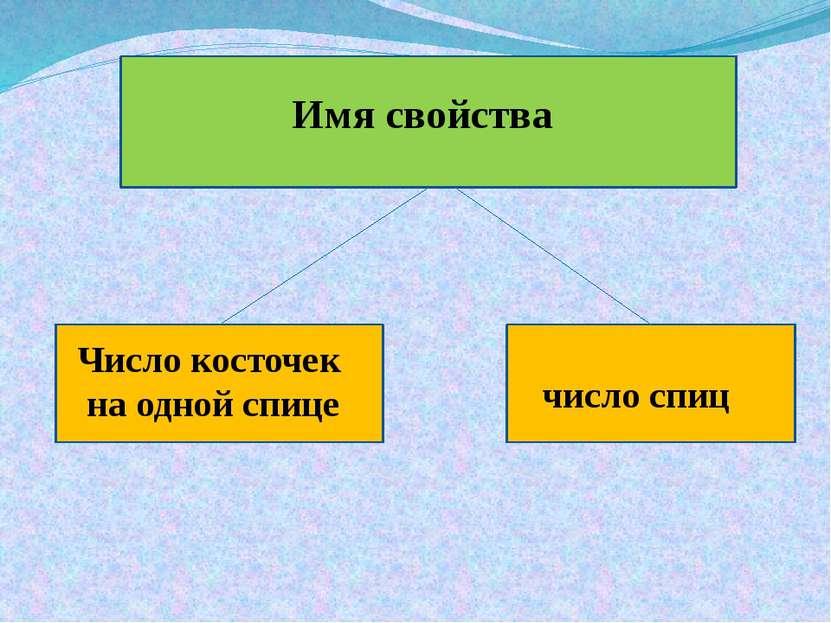 Имя свойства Число косточек на одной спице число спиц