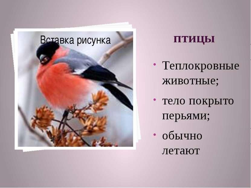 птицы Теплокровные животные; тело покрыто перьями; обычно летают