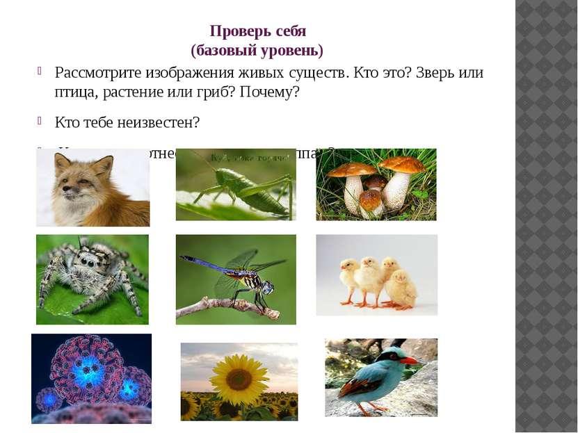 Проверь себя (базовый уровень) Рассмотрите изображения живых существ. Кто это...