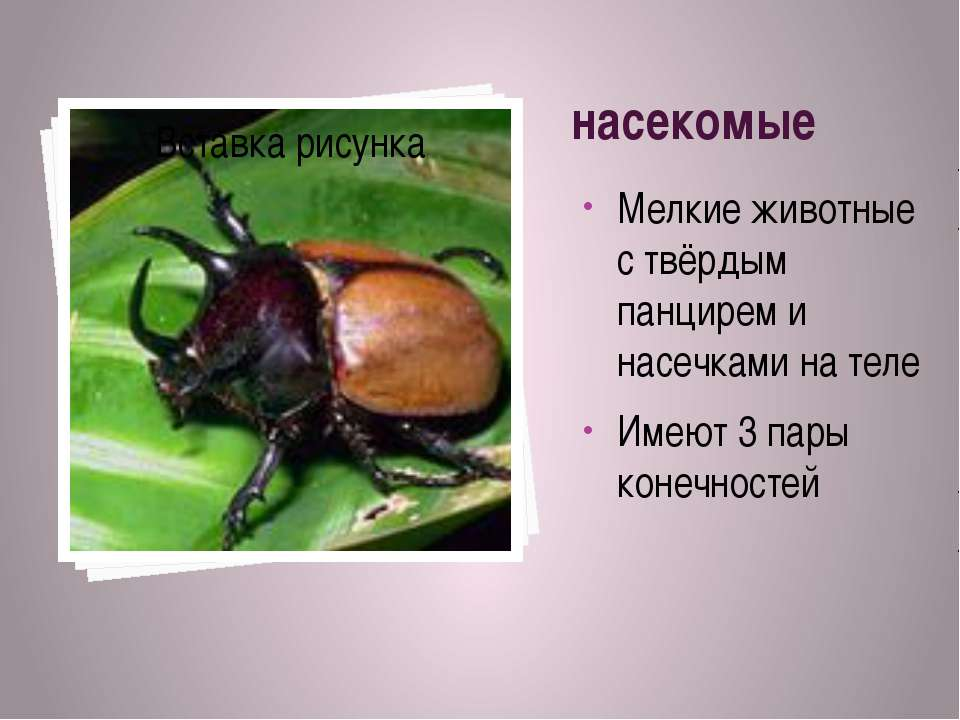 насекомые Мелкие животные с твёрдым панцирем и насечками на теле Имеют 3 пары...