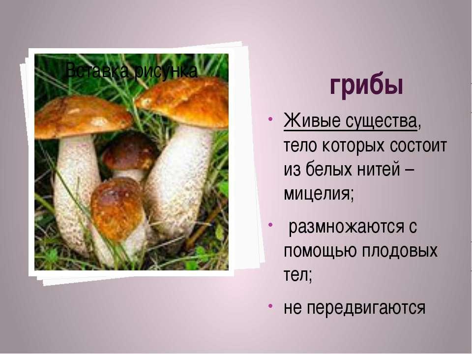 грибы Живые существа, тело которых состоит из белых нитей – мицелия; размножа...
