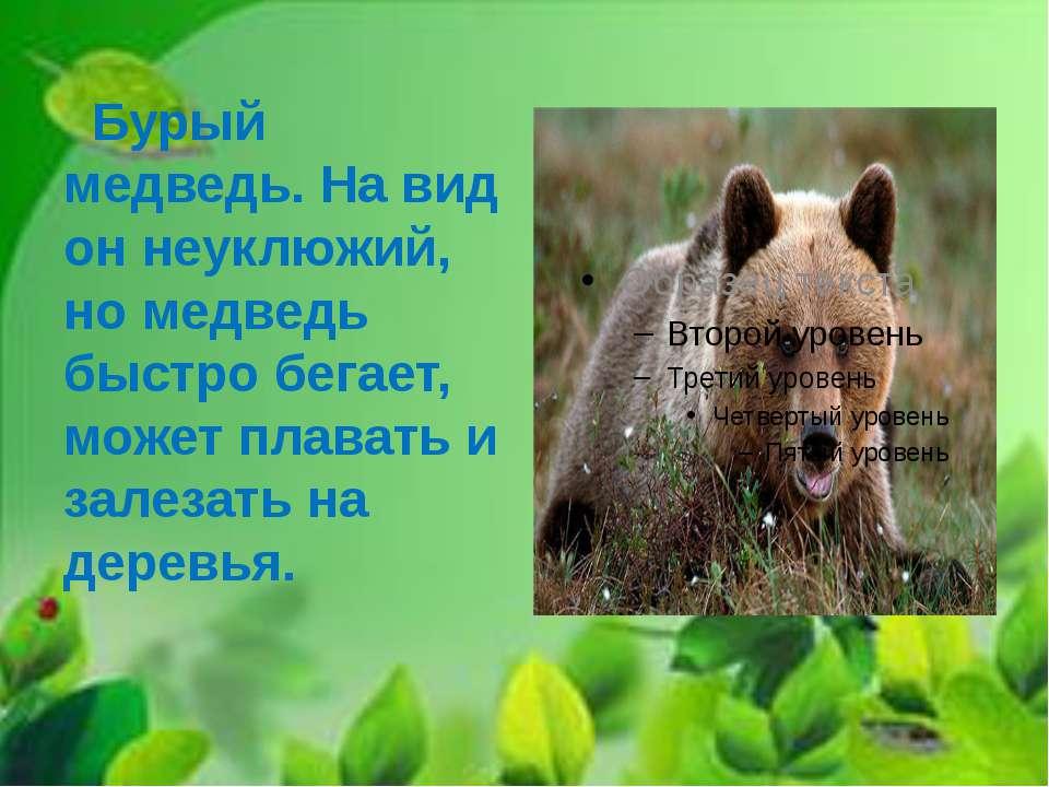 Бурый медведь. На вид он неуклюжий, но медведь быстро бегает, может плавать и...