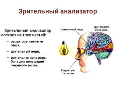 Схема движения взгляда
