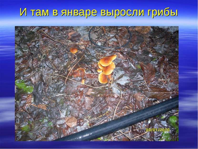 И там в январе выросли грибы
