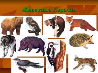 Животные Карелии