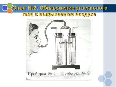 Опыт №2: Обнаружение углекислого газа в выдыхаемом воздухе