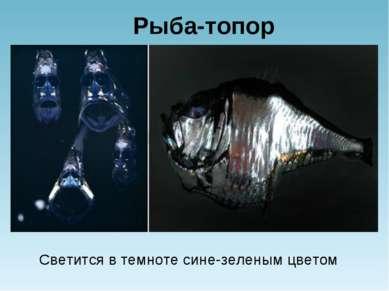 Рыба-топор Светится в темноте сине-зеленым цветом