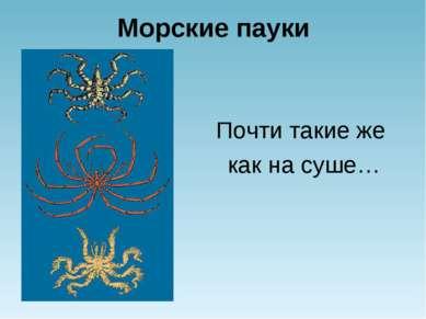 Морские пауки Почти такие же как на суше…
