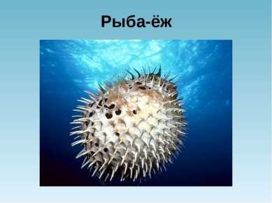 Рыба-ёж