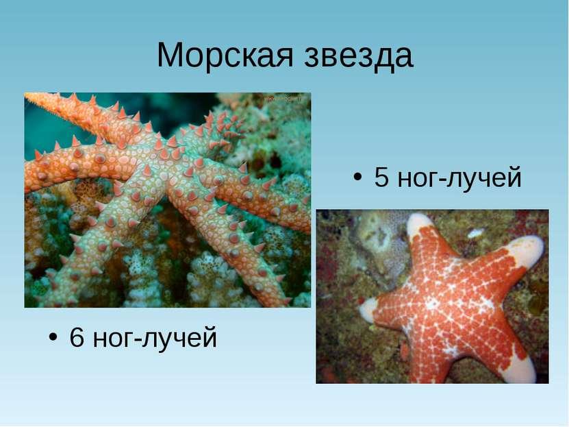 Морская звезда 5 ног-лучей 6 ног-лучей